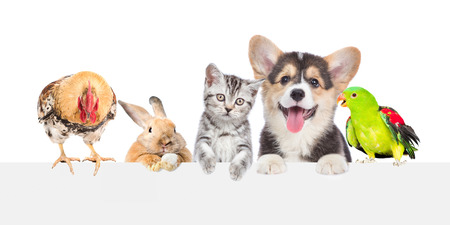 Group of pets together over white banner. isolated on white background.