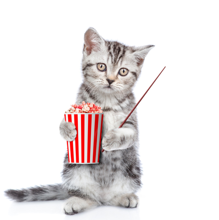 Funny kitten with popcorn pointing away. isolated on white background.