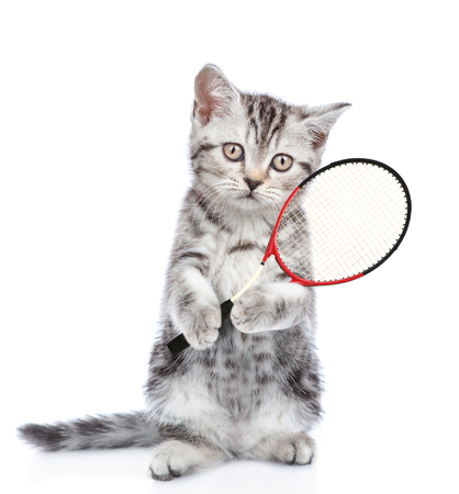 Cute kitten with tennis racket. isolated on white background.