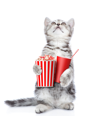 Cute kitten with popcorn and cola looking up. isolated on white background.