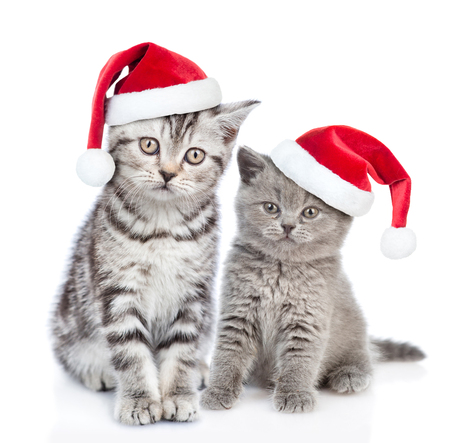 Two kittens in red christmas hats. isolated on white background. Stock Photo