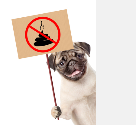 puppy holds sign no dog poop behind white banner. Concept cleaning up dog droppings. isolated on white background. Banco de Imagens