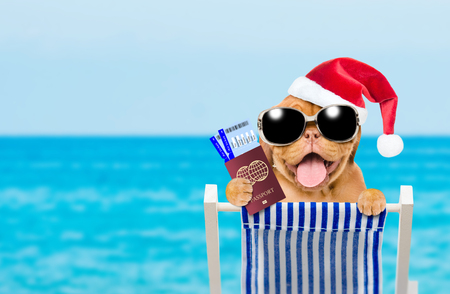 Happy puppy in red santa hat and  sunglasses in a deck chair with airline tickets and passport. Empty space for text.