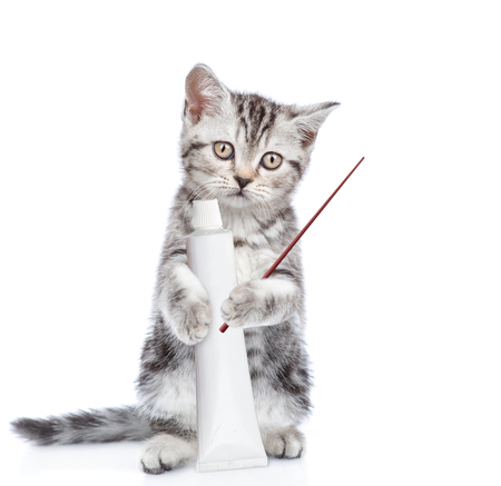 Cute kitten with a tube of toothpaste pointing away. isolated on white background.