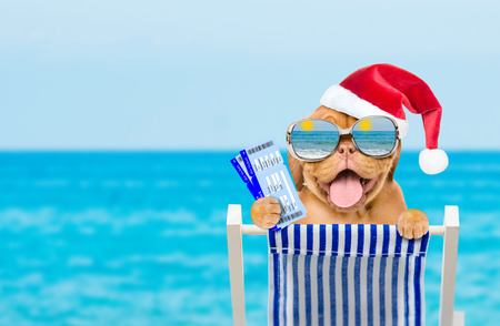 Happy puppy in red christmas hat and mirrored sunglasses in a deck chair with airline tickets.