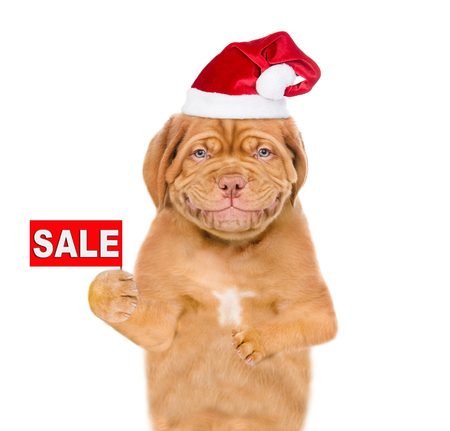 Smiling puppy  in red christmas hat with sales symbol. isolated on white background.