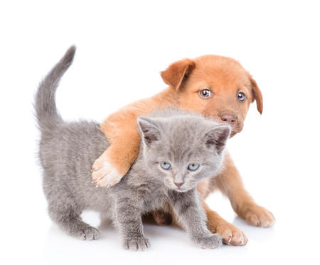 Playful puppy hugging kitten. Isolated on white background. Imagens