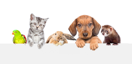 Group of pets  over empty white banner. isolated on white background. Space for text.