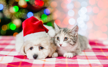 puppy and kitten in red santa hats with  Christmas tree on a background. Stock Photo