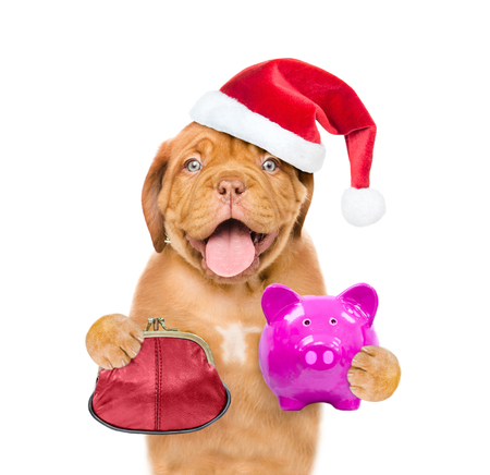 Funny puppy in red christmas hat with retro wallet and piggy bank in the paws. isolated on white background.