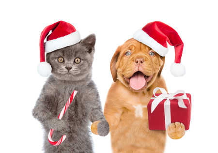 Funny puppy and kitten in red christmas hats with gift box and candy cane. isolated on white background.