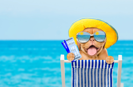 Happy puppy in summer hat and mirrored sunglasses resting on a deck chair in the beach with airline ticket. Empty space for text.