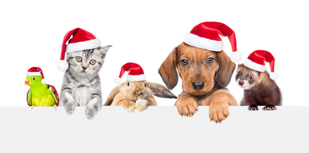 Group of pets  in red christmas hats over empty white banner. isolated on white background. Empty space for text.