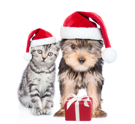 Kitten and puppy in red christmas hats with gift box. isolated on white background.
