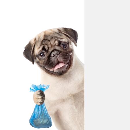 Il cucciolo tiene il sacchetto di plastica dietro la bandiera bianca. Concetto di ripulire escrementi di cane. isolato su sfondo bianco. Archivio Fotografico