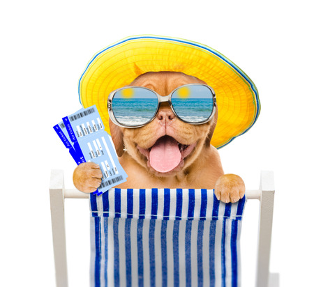 Happy puppy in summer hat and mirrored sunglasses holds airline tickets and resting on a deck chair. Isolated on white background. Stock Photo