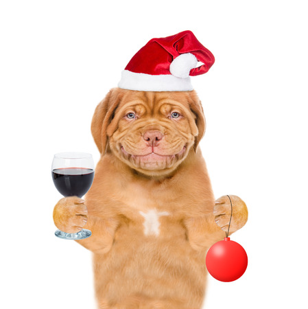 Happy puppy in red santa hat  holding glass of red wine and christmas ball. isolated on white background. Imagens
