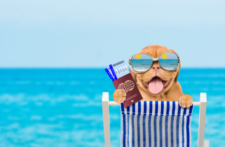 Happy puppy with mirrored sunglasses resting on a deck chair in the beach with airline ticket and passport. Empty space for text. Stockfoto