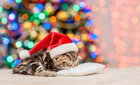 Tabby kitten in red santa hat sleep on pillow with Christmas tree on background. Empty space for text.