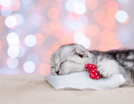Close up baby kitten sleeping with heart on pillow on festive background. Stock Photo