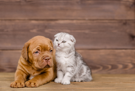 Puppy with kitten on wooden background.