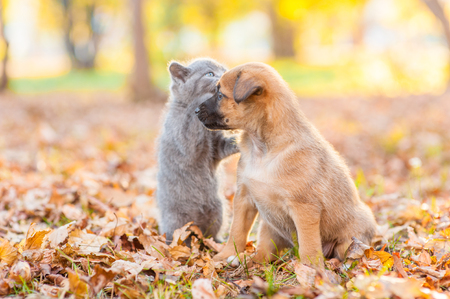 Cute puppy and kitten on autumn leaves at sunset.