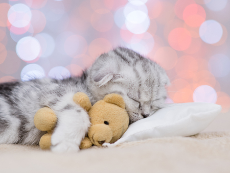 Close up baby kitten sleeping with toy bear on pillow on festive background.
