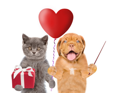 Kitten and puppy with heart shaped balloon and gift pointing on empty space. isolated on white background.
