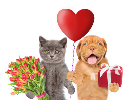 Cat and dog with heart shaped balloon, gift and flowers. isolated on white background.