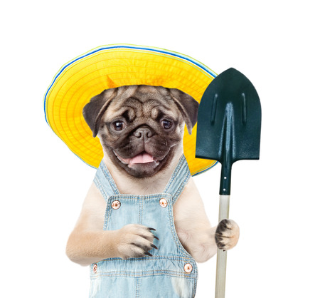 Funny puppy farmer in summer hat with shovel. isolated on white background. 免版税图像