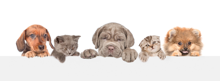 Group of cats and dogs over white banner. isolated on white background. Empty space for text.