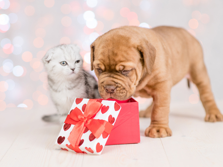 Cute puppy and baby kitten with gift box on festive background.