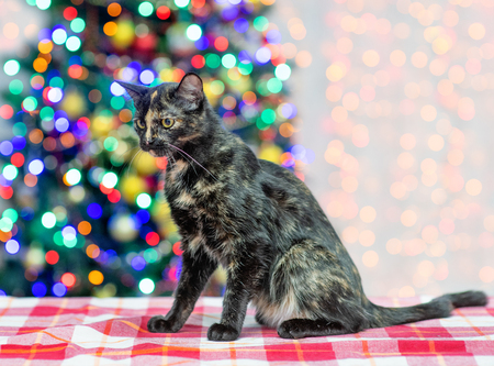 Mixed breed cat sitting in profile with Christmas tree on background. Imagens