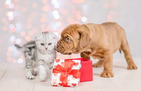 mastiff puppy and kitten with gift box on festive background.