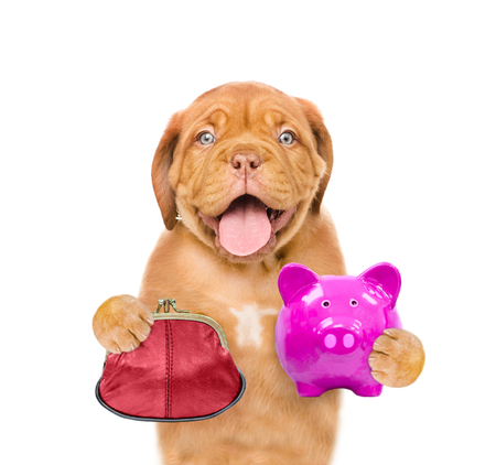 Funny puppy with retro wallet and piggy bank in the paws. isolated on white background. Stock Photo