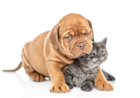 Puppy embracing kitten. isolated on white background.