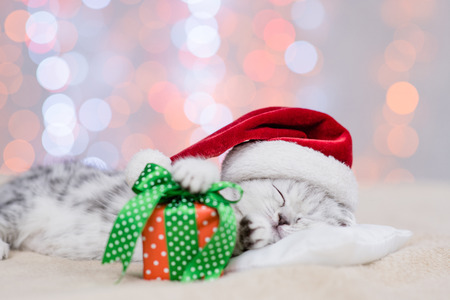 Tabby kitten in red santa hat sleep on pillow with gift box on festive background.