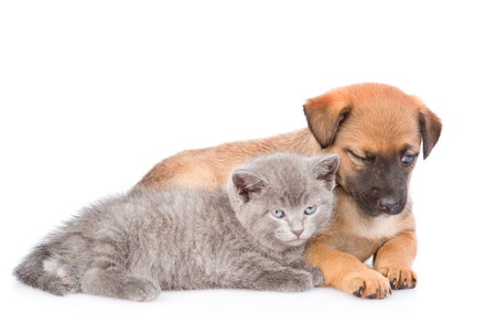 Sleepy mongrel puppy and kitten lying together. isolated on white background.