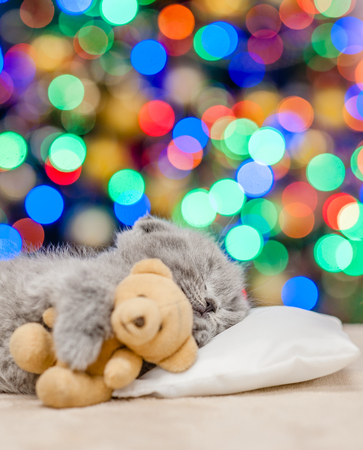 Baby kitten sleeping with toy bear with Christmas tree on background. Empty space for text. Stock Photo