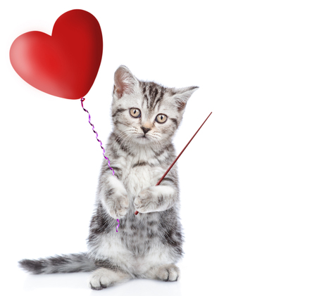 Kitten holding a heart shaped balloon and pointing on empty space. isolated on white background. Standard-Bild