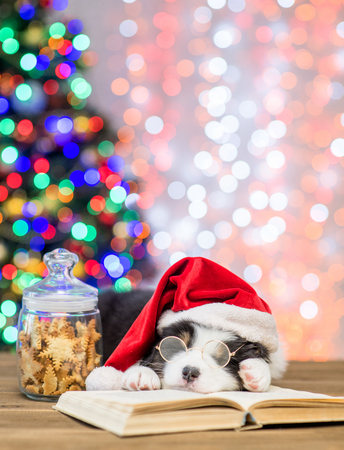 Australian shepherd puppy in red santa hat and eyeglasses sleeping near cookies on book with Christmas tree on background. Stock Photo