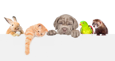 Group of pets  over empty white banner. isolated on white background. Empty space for text. Banco de Imagens