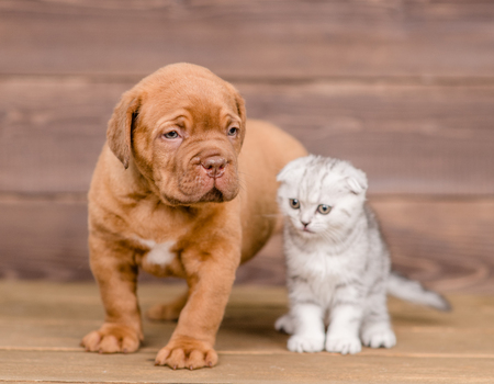Puppy and kitten on wooden background.