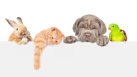 Group of pets  over empty white banner. isolated on white background. Space for text. Imagens - 118030395