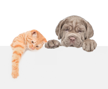 Cat and dog over white banner. isolated on white background.