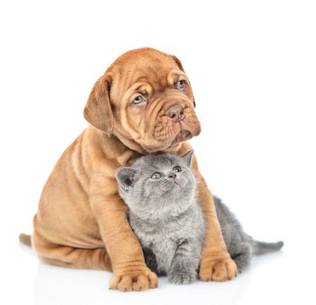 Chiot étreignant le chaton et levant les yeux. isolé sur fond blanc. Banque d'images