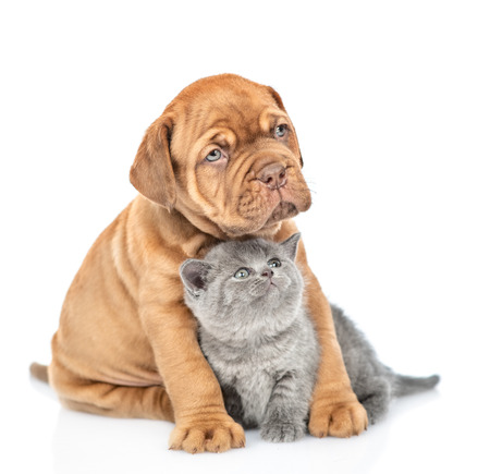 Puppy hugging kitten and looking up. isolated on white background.