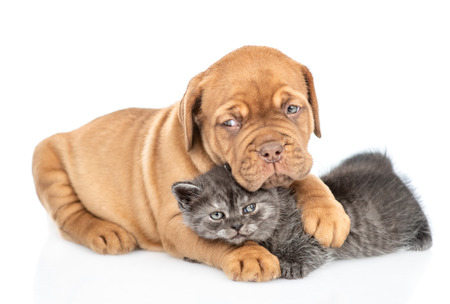 Sad puppy hugging kitten. isolated on white background. Stock Photo