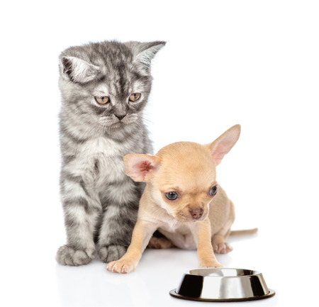 Cat and dog with empty bowl. isolated on white background