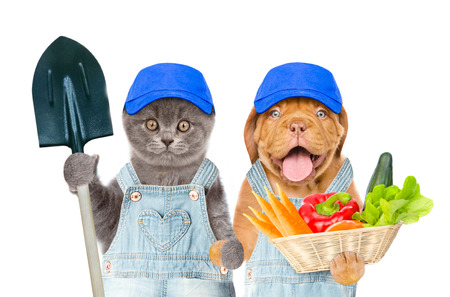 Funny kitten with shovel and puppy with basket of vegetables. isolated on white background.